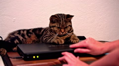 Cat leaning on laptop cover not allowing to open it Stock Footage