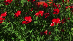 Red Flowers Decorative Linen - stock footage