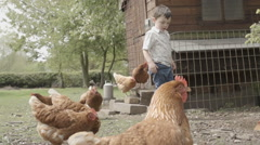 Little Boy With Free Range Chickens Stock Footage