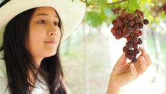 Woman picking, harvesting grape on field. Stock Footage