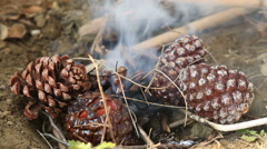Pine Cones Burning in a Fire 2 Stock Footage
