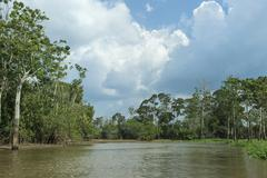 Flooded forest Amazon river Amazonas state Brazil South America Stock Photos