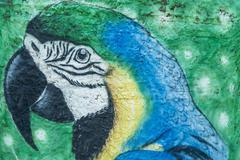 Parrot urban graffiti Parintins Amazonas state Brazil South America Stock Photos