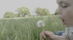 A little boy in a spring meadow blows the seeds off a ripe dandelion. As the Stock Footage