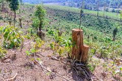 Tree were cut, deforestation damage global change. Stock Photos