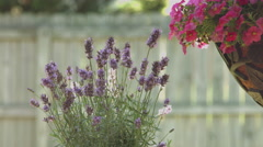 Pink and Purple Flowers Stock Footage