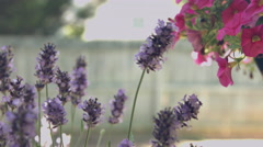Pink and Purple Flowers - stock footage