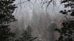 Mountain wood, snow, it's snowing, Stock Footage