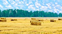 Bales of straw rectangular and trees Stock Photos