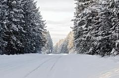 Road asphalt snow-covered and conifers Stock Photos