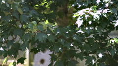 Leaves being blown in the wind Stock Footage