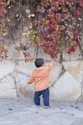 Happy Chinese baby boy standing in front of Boston Ivy Stock Photos