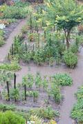 Vegetable garden after heavy rain Stock Photos