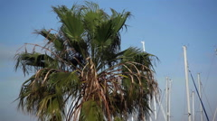 Palm tree blows in strong wind, extreme weather - stock footage