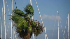 Extreme weather and strong winds, palm tree moves in the wind - stock footage