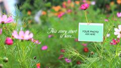Romantic Flower Photo Gallery Stock After Effects
