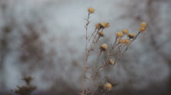 Seeds of wild flowers in a meadow in the frost. Wildflowers morning fall. - stock footage