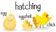 Little chick being hatched Stock Illustration
