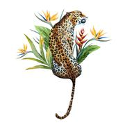 Watercolor vector leopard Stock Illustration