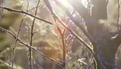 frozen tree branches - stock footage
