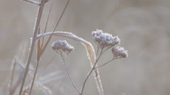 Seeds of wild flowers in a meadow in the frost. Wildflowers morning fall. Stock Footage