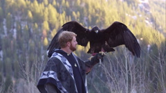 Golden eagle perched on falconer's arm. Stock Footage