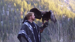 Golden eagle perched on falconer's glove. Stock Footage