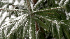 The Branch of Spruce Top And Snow. Stock Footage