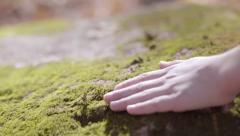 Child's hand fell mossy rock in sunlight Stock Footage