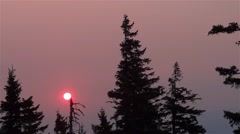 Huge red sun slips beneath the branches of a dry tree in cross vault redness  - stock footage