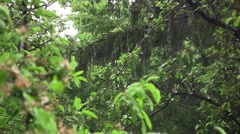 Heavy rain of spring in the garden. Rain wet green plants that have leaves wet  Stock Footage