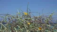 4K Desert Flowers on Sandy Beach, Arid Plants on Seashore, Coastline View Stock Footage