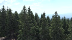 4K Mountain Tracking View, Conifer Forest Fir, Alpine Landscape, Hiking Pov Stock Footage