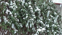 Snow intense, filmed in front of the entrance door of house  Stock Footage
