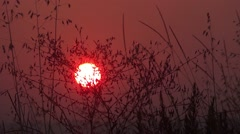 Sun in the sky, a yellow ball glowing. The sky is red. Herbs are moving Stock Footage