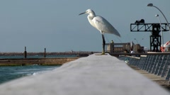 Great Egret sitting on the bridge in the port of Tel Aviv. - stock footage