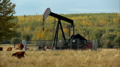 Pump jacks working in a field for oil and gas industry. Stock Footage