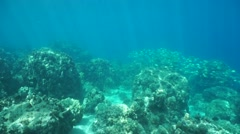 Coral reef ocean floor Pacific French Polynesia - stock footage