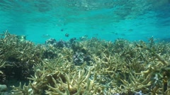 Shallow coral reef with fish French Polynesia - stock footage