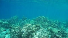 Underwater landscape coral reef French Polynesia - stock footage