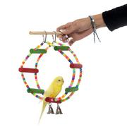 playing parakeet and Cockatiel - stock photo