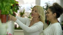 Showing Potted Orchid to Customer Stock Footage