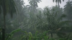 Tropical Downpour in the Jungle. Slow Motion Stock Footage