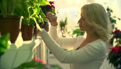 Shopkeeper Caring for Flowers Stock Footage