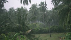 Tropical Downpour in the Jungle. Slow Motion - stock footage