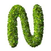 Letter N made of green leaves - stock photo