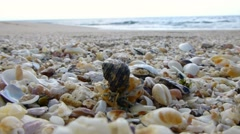 Animal tries to change shell on the seaside Stock Footage