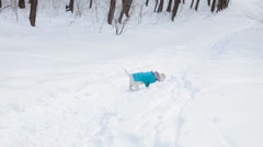 Dog retrieving a toy disk in snow - stock footage