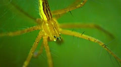 Large, Yellow Spider on a Leaf. FullHD video Stock Footage