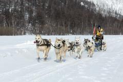 Kamchatka Dog Sledge Race Beringia. Russian Far East, Kamchatka Peninsula - stock photo
